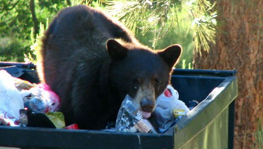 Bear-in-Dumpster.jpg